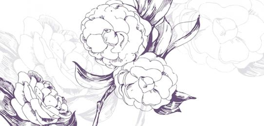 Desenho em grafite de três camélias abertas, presas a finos galhos com folhas.